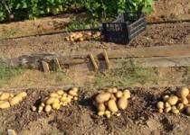 Καλλιεργούμε με Ενεργούς Μικρο-οργανισμούς