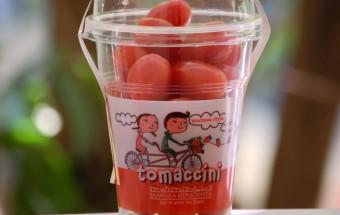 tomaccini1