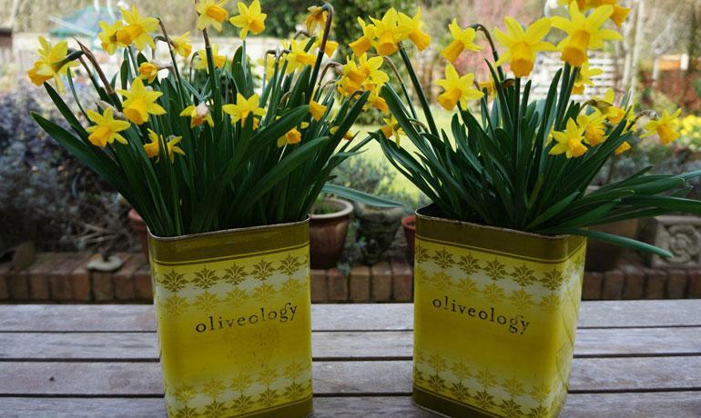 oliveology-3