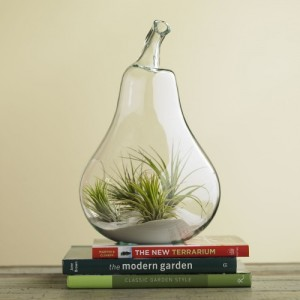 air-plant-terrariums