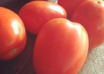 Τομάτα: η ελκυστική κόκκινη
