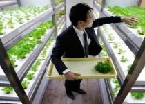Urban farming made in Japan