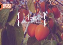 Λωτός, το λησμονημένο φρούτο