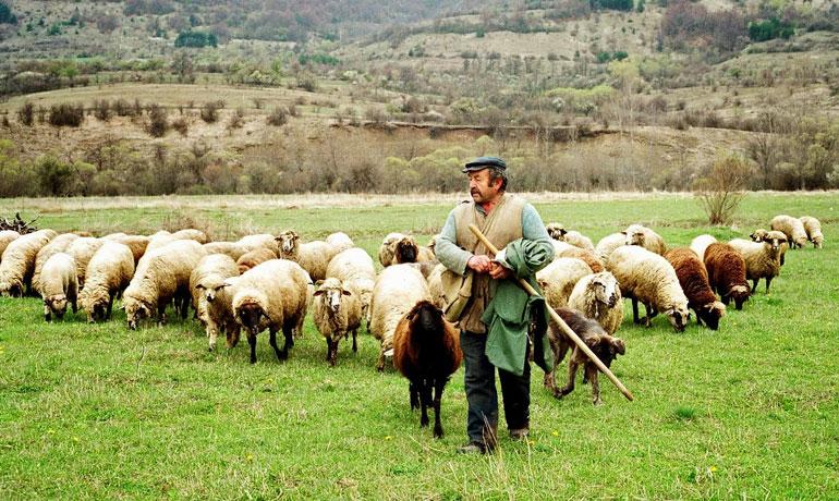Αποτέλεσμα εικόνας για κτηνοτροφια
