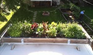 lulu roof